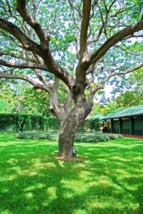13811597-branches-of-big-trees-in-the-garden
