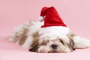 byb-christmas-post-blues-puppy-dreamstime_87564021